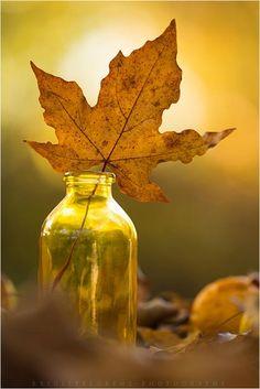 autumn in a bottle