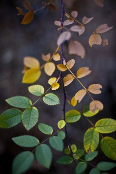 Leaves by jogorman - reminds me of Devine Color's Wild at Heart #paint collection. #palette #inspiration