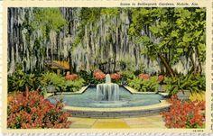 Old Penny Postcard from Bellingrath Gardens