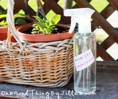 Make your own natural {pleasant-smelling!} mosquito repellent