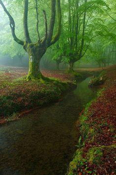 El bosque encantado. San Martín de Valdeiglesias. Madrid. ESPAÑA