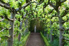 Arche de fruitiers