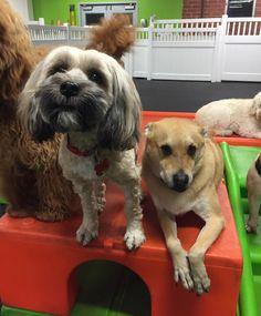 Momo & Max. #gymbuddies #dogsofinstagram