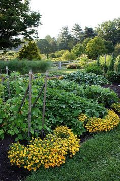 Beautiful Yet Practical Vegetable Garden Designs