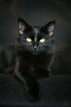E a beleza se vestiu de negro. - Google+ Mais