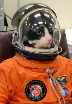 Houston, we have a problem #FunnyPhotosGR #funnyphotos #funnyanimals #cats #FunnyCats