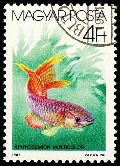 https://flic.kr/p/77AUVX   stamp hungary 1987 bunter prachtkärpfling aphyosemion multicolor