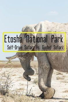 In this Episode we pass through the Namib-Naukluft Mountains and National Park, Walvis Bay Area, Etosha National Park and the Kavango/Zambezi Regions (the Ca. Safari, Vida Animal, Big 5, Camping, Self Driving, National Parks, Animals, Watch, Zoological Garden