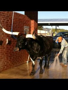 .only in Texas!