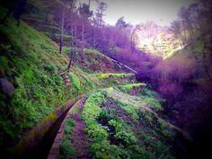 Madeira Island - Levada