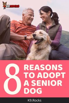 The reasons that people ultimately adopt a dog vary but choosing to adopt a senior dog has many benefits. One significant aspect that appeals to the masses is knowing what you are adopting. dog home | senior dog | senior dogs | adopting a dog | first dog | I love dogs | I love dog | best dogs | reasons to get a dog | why people love dogs Dog House Kit, Dog Food Delivery, Large Dog Breeds, Large Dogs, Foster Animals, Living With Dogs, What Kind Of Dog, Dog Health Care, What Dogs