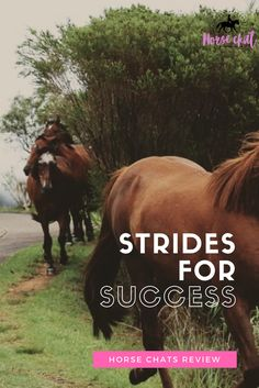 Have you heard of Strides for Success? It is an incredible blog! Read this review by horse chats!