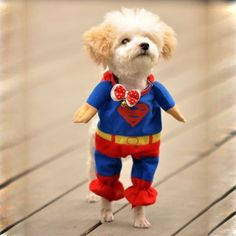 Look, Up in the Sky....its Super Dog! I love this costume…