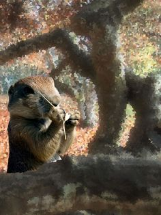 Fall Prairie Dog by Kate Hubbard by KateHubbardPhotos on Etsy