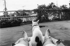 Araki Cats