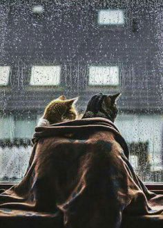 (The best shelter for a rainy  day is each other  ..  for any weather actually..  remember that .   Then was then   Now is here  and tomorrow no one knows )