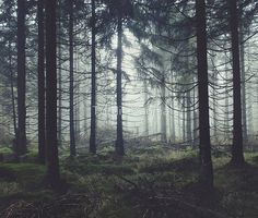 'Through The Trees' Tapestry by Tordis Kayma - Photography, Landscape photography, Photography tips Forest Photography, Landscape Photography Tips, Photography Tricks, Photography Studios, Digital Photography, Aerial Photography, Photography Lighting, Scenic Photography, Photography Backdrops