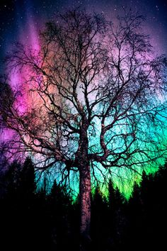 Aurora Treealis - Damn nice northern lights, so I decided to view them behind a tree. Beautiful Sky, Beautiful Landscapes, Beautiful World, Beautiful Lights, Galaxy Wallpaper, Nature Wallpaper, Aurora Borealis, Nature Pictures, Belle Photo