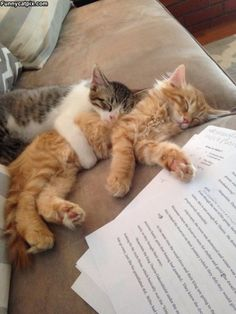 58 New Ideas for cats and kittens funny night Cute Kittens, Ragdoll Kittens, Animals And Pets, Funny Animals, Cute Animals, I Love Cats, Crazy Cats, Gatos Cats, Photo Chat