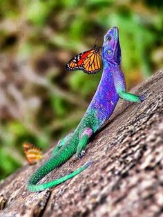 "♥ Color animals ""Hey, thanks for the ride, big buddy""!!!!! ""Anytime, lil' guy, anytime""!!!!!"