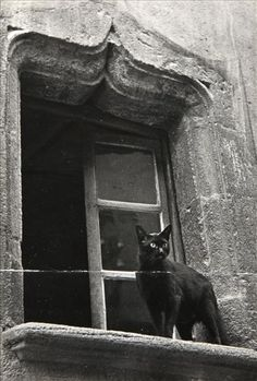 Black and white photo of a black cat in a very Gothic-looking window.