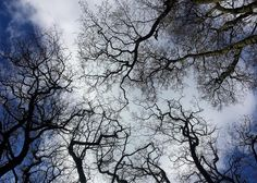 Beautiful patterns under the 250 year old great #Oaks  #nature #trees #oaks #patterns #wildlife #landscape #sky #blue #artistic #photo #creative #wood #treelovers #nofilter