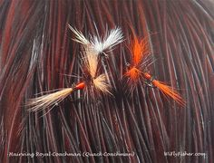 I really enjoy the tying and fishing the classic Hairwing Royal Coachman dry flies.