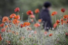Scenes of the City: SF Botanical Garden Celebrates 75 Years | 7x7
