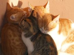 Cats in Crete - a look beyond and behind these iconic images of Greece Pretty Cats, Cute Cats, Funny Cats, Pretty Kitty, Puppies And Kitties, Cats And Kittens, Animals And Pets, Baby Animals, Kittens