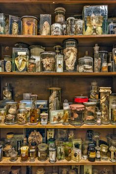 The World's Strangest Museum: A Look Inside Viktor Wynd's Mind-Bending Cabinet of Curiosities - I would like to go.
