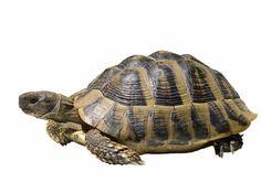 Din skildpadde kan bære på mange sygdomme