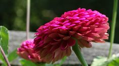 My Photography: Photo: Another Cool Flower