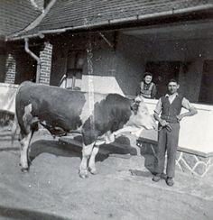 A jószág volt az aranya a népnek. Vintage Farm, Old Pictures, Farm Life, Historical Photos, The Past, Flag, Traditional, Fictional Characters, Art