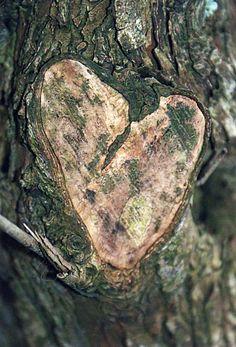 arbre - coeur