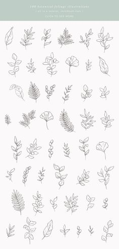 Botanical Sketches Vector Illustrations - Creative MarketYou can find Botanical illustration and more on our website. Mini Drawings, Tattoo Drawings, Art Drawings, Tattoo Sketches, Tattoo Ink, Bullet Journal Ideas Pages, Bullet Journal Inspiration, Cute Tattoos, Flower Tattoos