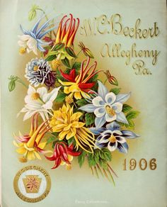 Back cover of W. C. Beckert's 1906 'Garden, Flower & Lawn Seeds' catalogue with an illustration of Fancy Columbines