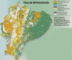 El país de Ecuador pierde más de 70,000 hectáreas de bosque anualmente.
