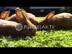Relaxation for Children - Music for learning, positive, harmony, quiet - RABBIT BABYS - YouTube