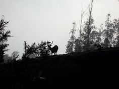 Wild_Deer_in_Nilgiris.JPG (4288×3216)