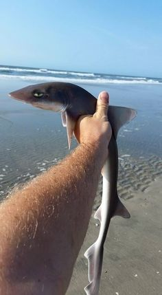 Because sharks aren't always that tough: | 21 Reasons You Should Always Have Low Expectations