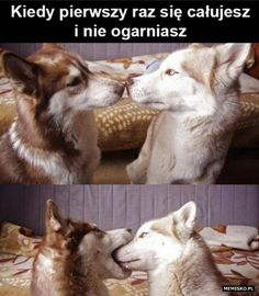 Funny Cat Memes, Wtf Funny, Funny Cats, Hilarious, Im In Love, Teen Wolf, Cool Pictures, Husky, Haha