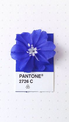 Pantone 2726 C