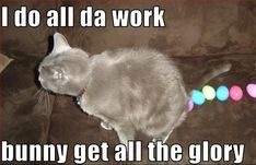 Funny Easter Jokes: Check our Latest and Awesome Collection of Funny Easter Jokes For Adults, Kids, Friends & Family, Funny Easter Religious Jokes, Funny Easter Bunny Jokes Happy Easter Funny Images, Funny Easter Jokes, Funny Easter Pictures, Funny Easter Bunny, Easter Cats, Funny Cat Memes, Funny Cat Videos, Funny Animal Pictures, Dog Pictures