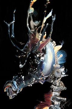 Seahorse - Anita Smith Home Beautiful Sea Creatures, Deep Sea Creatures, Animals Beautiful, Underwater Creatures, Underwater Life, Seahorse Art, Seahorses, Leafy Sea Dragon, Fauna Marina
