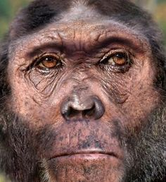 Reconstruction of Homo rudolfensis Theory Of Evolution, Human Evolution, Homo Habilis, Human Family Tree, Forensic Facial Reconstruction, Prehistoric Man, African Origins, Early Humans, Anthropologie