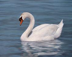 Wildlife Paintings by UK wildlife artist Rachel Stribbling. Wildlife Paintings, Wildlife Art, Animal Paintings, Animal Drawings, Beautiful Swan, Beautiful Birds, Animals Beautiful, Cute Animals, Swan Pictures