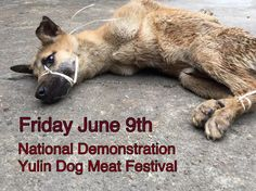 """The Yulin Dog Meat Festival begins in less then four days. There is no ban. Trucks have been spotted moving into the city. And in a few days, the slaughter will begin. . In a direct statement made to Animal Hope and Wellness by Yulin authorities - """"There is no ban on dog meat sales during the festival as some animal rights groups have claimed."""" . This Friday June 9th, there will be a nationwide demonstration across America, speaking out against those involved in the festival - urging the…"""