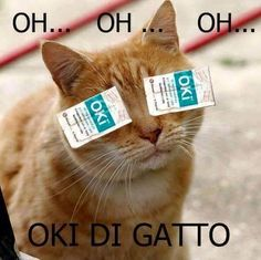 Oh oh oh oki di gatto Funny Images, Funny Photos, Funny Facts, Funny Jokes, Funny Animals, Cute Animals, Funny Pins, Cat Memes, Funny Moments