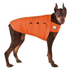 Orange Doberman Pinscher Dog Tummy Warmer, great for warmth, anxiety and laying with our dog rain coat. High performance material. Made in the USA. #babyraincoat