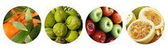 Os alimentos mais leves e saudáveis do outono | Território Animale